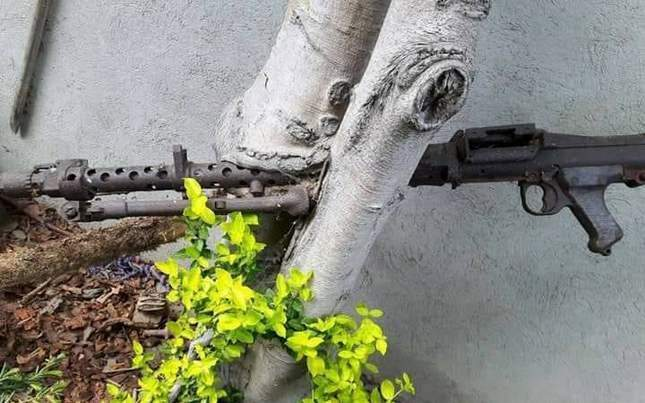 WWII finds grown into tree