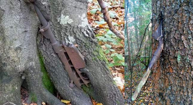 wwii-finds-grown-into-tree-01